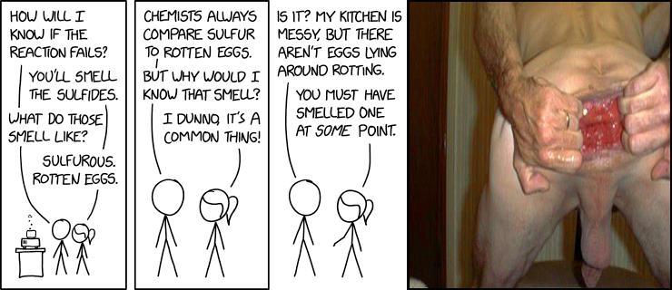 Chemist Eggs